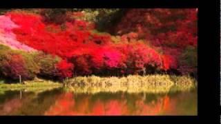 Halala Africa Cherrie Blossoms
