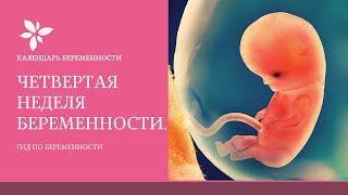 4 Неделя Беременности | Развитие Плода на 4 Неделе