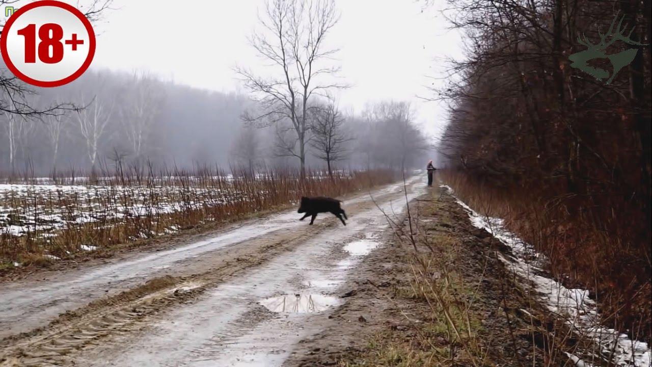 ТОР-5 ОХОТА НА КАБАНА. САМЫЕ КРАСИВЫЕ ВЫСТРЕЛЫ/ wild boar hunting