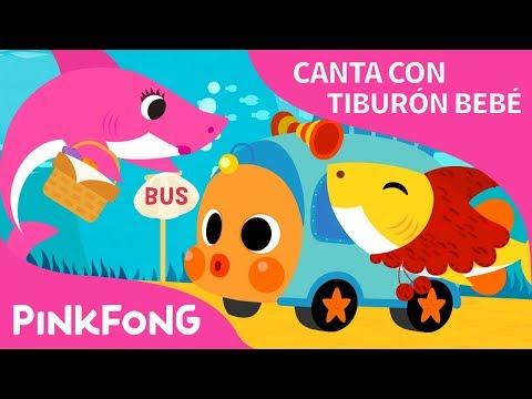 Tiburón Bebé en el Bus | Canta con Tiburón Bebé | Pinkfong Canciones Infantiles