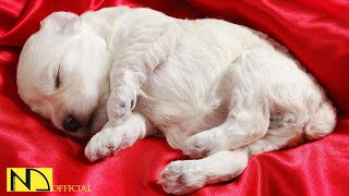 10 Hours Calming Sleep Music  Stress Relief Music, Insomnia, Relaxing Sleep Music ♬ Baby Dog Puppy