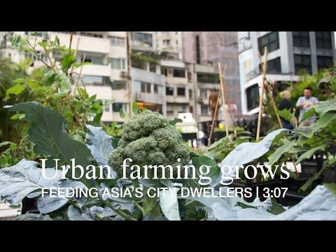Urban farming grows