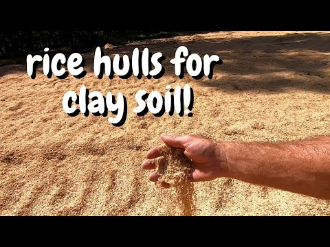 amending-heavy-clay-soil-with-rice-hulls!!