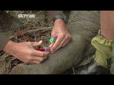 Hundreds of Rhinos Translocated in South Africa in a Bid to Curb Poaching