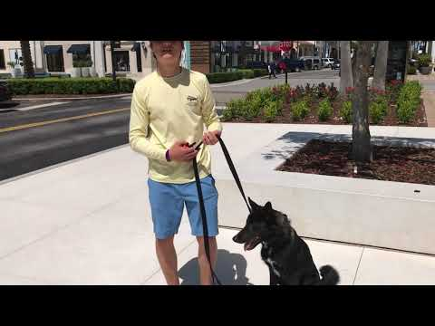 Best Dog Training in the Country!! Jacksonville, FL 2 week before and after video