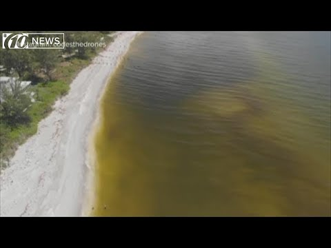 Scientists say Florida has the solution to red tide