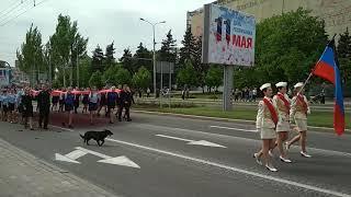 Смотреть Всем!!! Собака испортила парад в Донецке 9 мая 2018