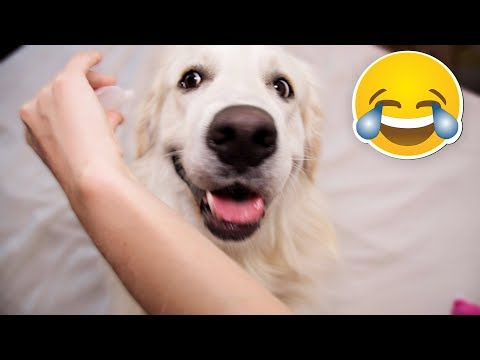 Funny Dog Reacts to Squeaker [BEST REACTION EVER]