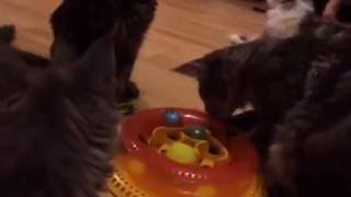 Petstages игрушка для кошек Трек Kitty's choice