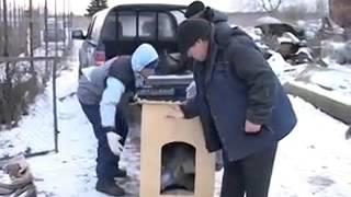 Видеозаписи Инициативная группа Помощи Животным ТИМВИЛЛЬ