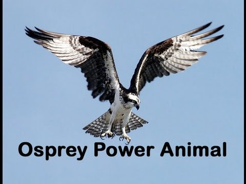 Osprey Power Animal