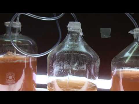 North Sea Plankton Ecology