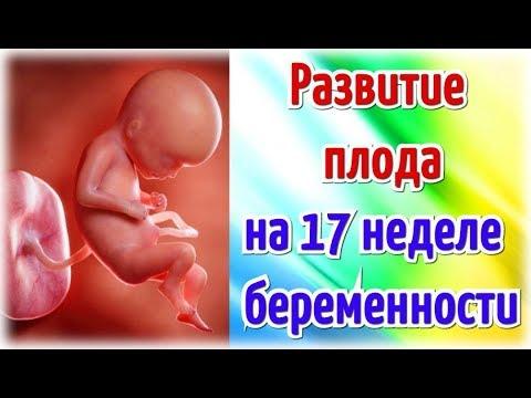 Развитие плода на 17 неделе беременности/Календарь беременности!