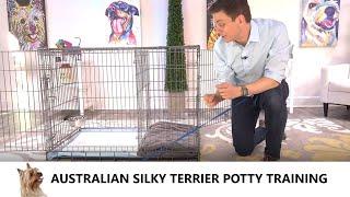 Australian Silky Terrier Potty Training from WorldFamous Dog Trainer Zak George  Silky Terrier