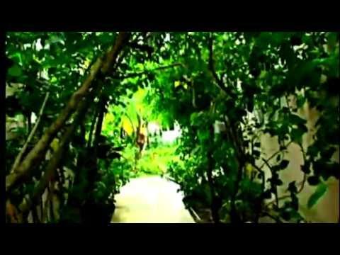 ONYX BROWN - JAMAICA PARADISE MUSIC VIDEO/ MUSIC FARM INTL