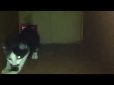 Cat vine : Hole in one!!!!