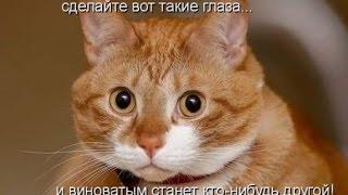 Смешные кошки игры | Funny cat games
