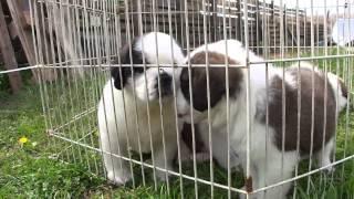 子犬が生まれていますよ http://www.woof.jp/sb.html 2015年3月7日に生...