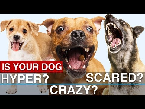 Hyper dog? Scared dog? Potty training issues? How to SOLVE Common Problems!