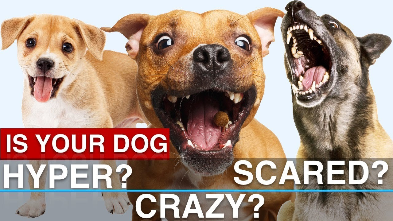 Hyper Dog Scared Potty Training Issues How To Solve Common Problems
