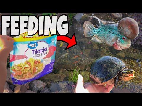 FEEDING ALL My FISH!!!