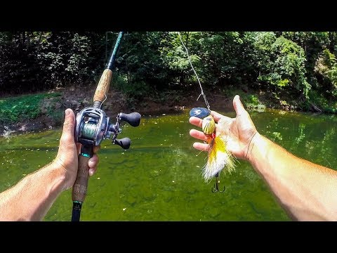 Searching For Musky & Smallmouth In A TINY Clear Creek