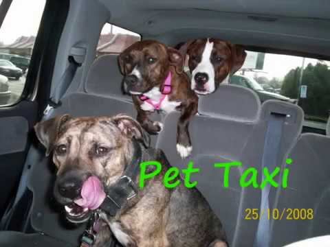 Home pet care service muncie in
