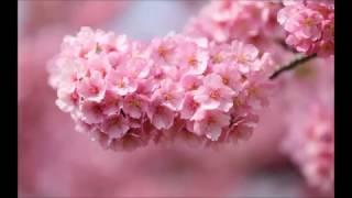 桜の季節です。 やはり森山直太郎さんの名曲「さくら」良いですね。 こ...