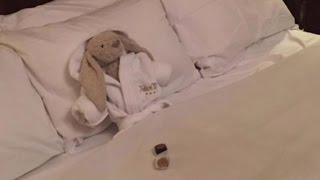 Why This Stuffed Bunny Was Given The Hotel Stay Of A Lifetime