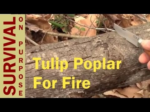 Tulip Poplar Bark - Natural Fire Resources