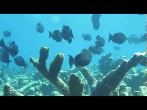 Antigua Shipwreck and Cades Reef Snorkeling Adventure with Captain Nick