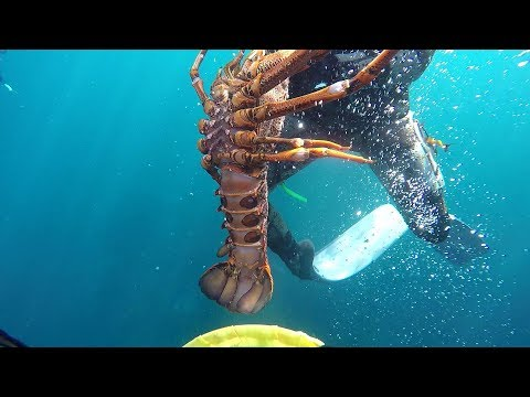Abalone And Crayfish Portland