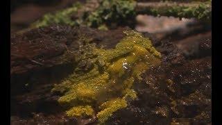✅  Blob - nowy niezwykły organizm w paryskim zoo. Potrafi się uczyć i ma 720 płci