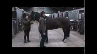 how to prepare beet pulp for horses