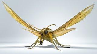 Rigged 3D moth by Joel Stutz