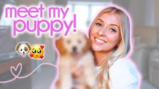 I GOT A PUPPY!  bringing home my cavapoo...