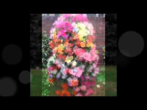 цветов клумб для с названиями фото