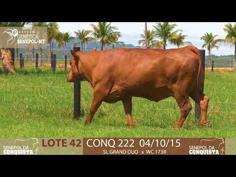 LOTE 42 CONQ 222