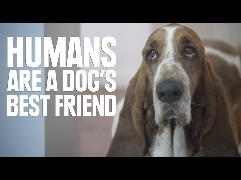 Humans Are A Dog's Best Friend