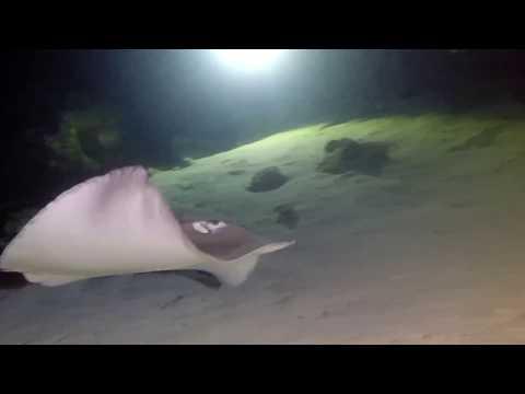 Night dive at Alimata Jetty, The Maldives