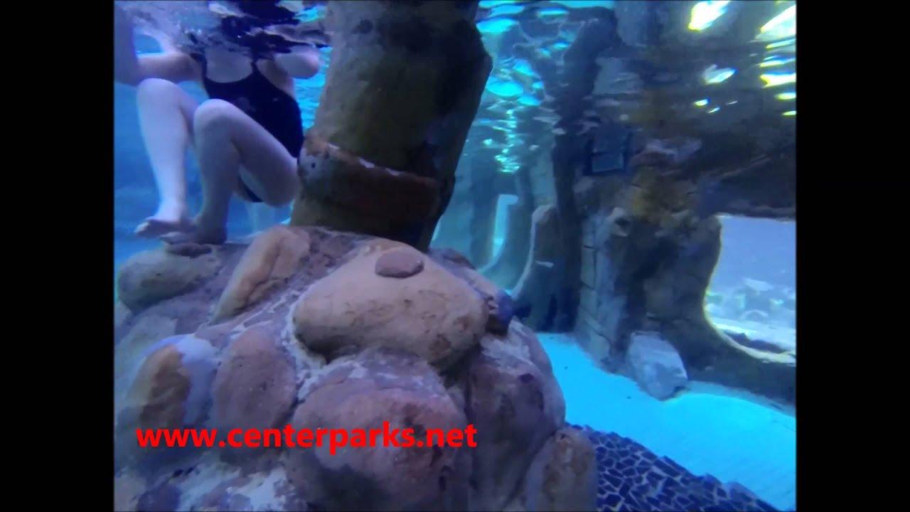 Center parcs - 188 - De Kempervennen - Plongée avec les requins et poisson