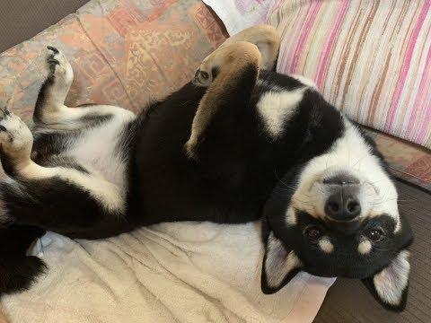 世界に愛はあるしそこにだいたい犬がいる