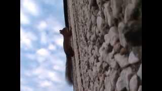 Белка на стене