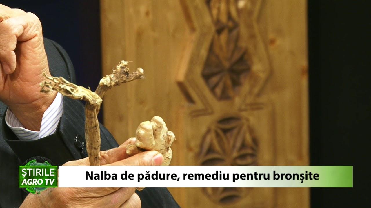 Nalba de padure remediu pentru bronsite 23 12 2020