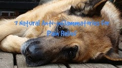hqdefault - Back Pain In Dogs Veterinarian