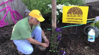 Landscaping Tips - How To Train A Climbing Plant