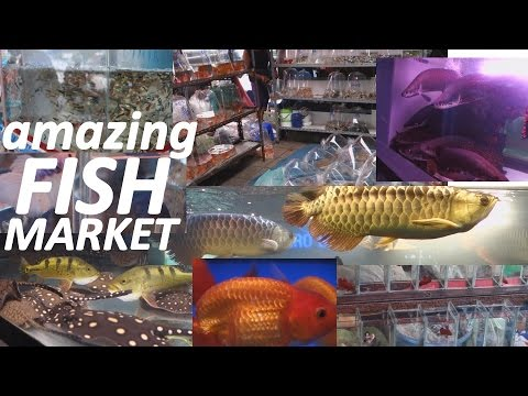 Aquarium Fish Market in Bangkok Thailand. WOW!!!