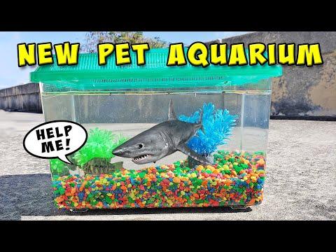DIY Pet Exotic Fish Aquarium With FirstStateFishing
