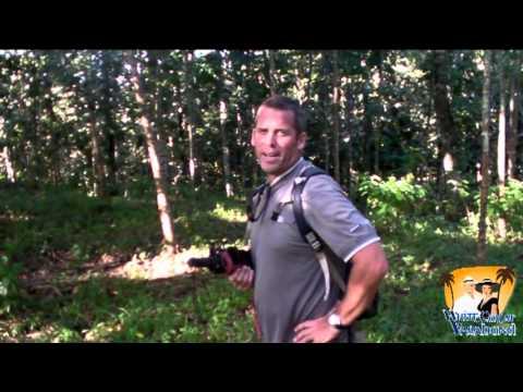 Reforestation in Costa Rica; Teak, Almandro Tree Farm