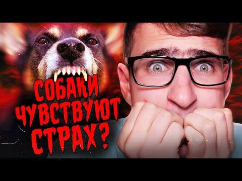 Чувствуют ли собаки твой страх?